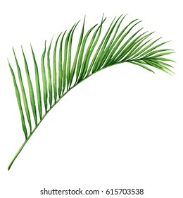 Watercolor painting palm leaf, green leave isolated on white background. Watercolor hand painted illustration.coconut leaf pattern ,wallpaper ,closeup brush stroke texture. With clipping path.