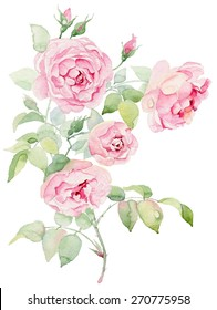 Watercolor painting, pink roses on white background.