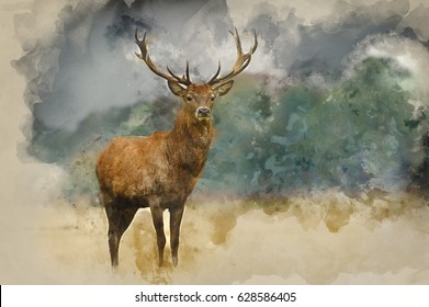 Watercolor painting of Portrait of majestic powerful adult red deer stag in Autumn Fall forest