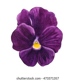 Watercolor painting of purple flower. Can be used as a greeting card for background, birthday, mother's day and textile patterns. Background for web pages, wedding invitations, wallpaper.