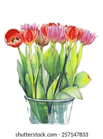 "Watercolor painting ""Spring red and pink tulips"""
