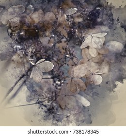 Watercolor painting of Stunning dried hydrangea hortensia flowers cross processed for vintage look