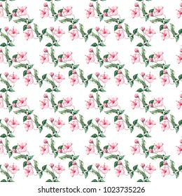 Watercolor pattern with a Chinese rose. Isolated on white background. Tropical illustration.
