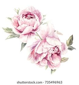 Watercolor Pink Peonies Illustration