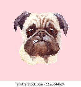 Watercolor puge dog puppy. Handdrawn illustration