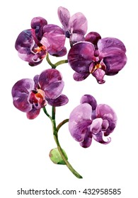 Watercolor purple orchid flowers isolated on white background. Orchid blooming branch. Hand painted illustration for greetings, invitations, pattern design