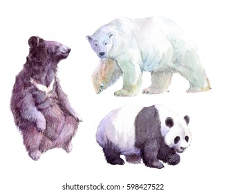 Watercolor realistic sun bear, white bear, grizzly bear, animal isolated on a white background illustration.