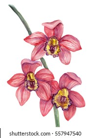 Watercolor red orchid bouquet on white background.