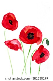 Watercolor red poppies, hand drawn illustration of a white background
