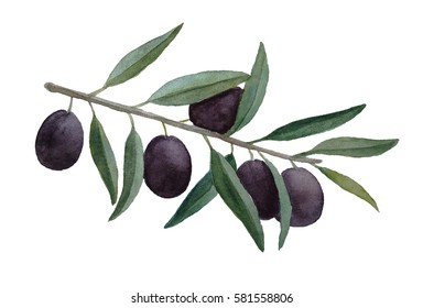 Watercolor ripe olive branch