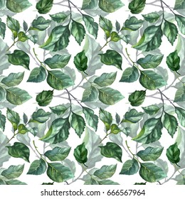 Watercolor rose foliage pattern. Handmade illustration. Green rose leaves on white background. Mint green emerald azure dark green roses brunches.Tender summer background for decoration and design.