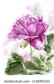 Watercolor rose with leaves. A gentle illustration for printing on postcards, posters, clothes and other surfaces.
