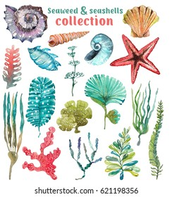 Watercolor Sea Life, Seaweed, Shell, beautiful collection for design
