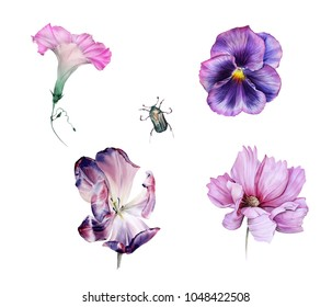 Watercolor set of chafer and pink and violet garden flowers: ipomoea, viola, tulip and cosmos