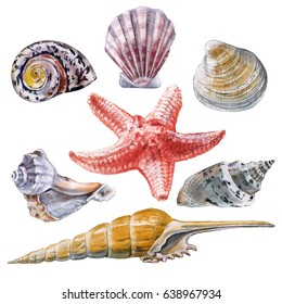Watercolor set of colored shells and starfish on a white background