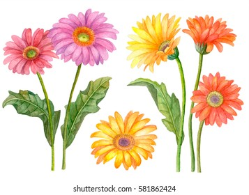 Watercolor set of flowers, hand drawn illustration of gerbera flowers isolated on white background, floral collection.