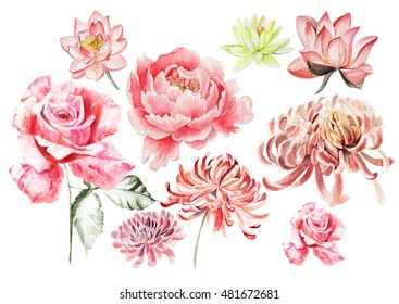 Watercolor set with flowers of rose , peony , chrysanthemum. Illustration