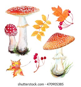 Watercolor set of Fly agaric mushroom in  grass and autumn leaves. Isolated on white background . Maple leaf, hawthorn