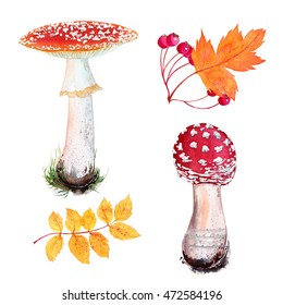 Watercolor set of Fly agaric mushroom in grass and autumn leaves. Isolated on white background. Hawthorn leaf and berries