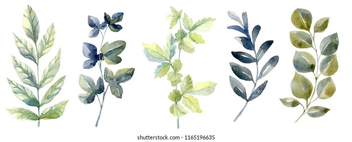 Watercolor set with forest leaves. Collection with ivy, grapevine, cowberry . Autumn, summer and spring seasons. Wash drawing illustration.