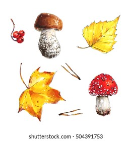 Watercolor set of forest mushrooms, boletus, fly agaric mushroom, autumn leaves. Hand drawn autumn illustration isolated on white background . Maple leaf, birch leaf