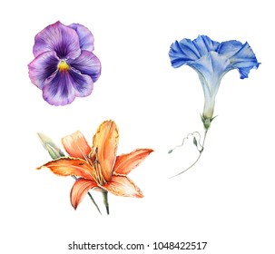 watercolor set of garden flowers: blue Ipomoea, purple Viola,  orange Lily