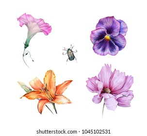 Watercolor set of garden flowers and chafer: viola, ipomoea, lily, cosmos