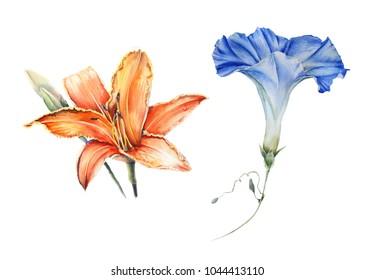 watercolor set of garden flowers: Ipomoea, Viola