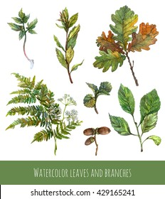 Watercolor set of green plants, tree branches with leaves, flowers. Fern, white flowers, tree branches, oak leaves, acorns, forest growth