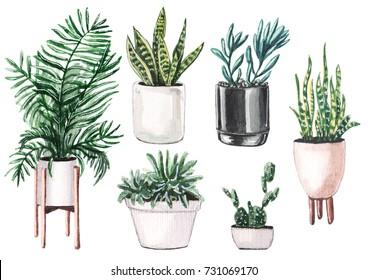 Watercolor set of home plants in pots.