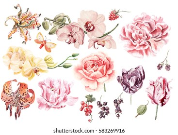 Watercolor set with orchid flowers, lily, peony, rose, tulip, berries, currants and raspberries. Illustration.
