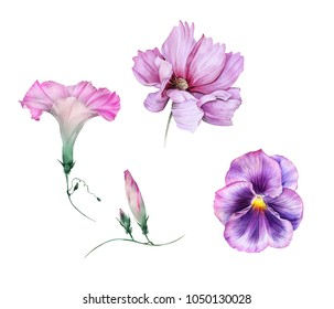 Watercolor set of pink flowers; Ipomoea  with a bud, Cosmos, Viola