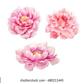 Watercolor set of pink peony illustrations, isolated object on white background