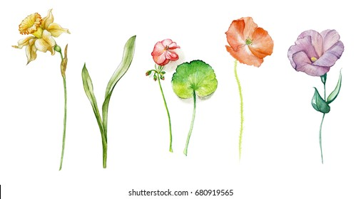 Line Drawing Of Flowers Clipart : Daffodil drawing images stock photos & vectors shutterstock