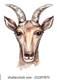 watercolor sketch of a goat on a white background
