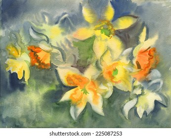 Watercolor sketch: Variety of daffodils