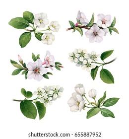Watercolor spring flowers. Blooming trees