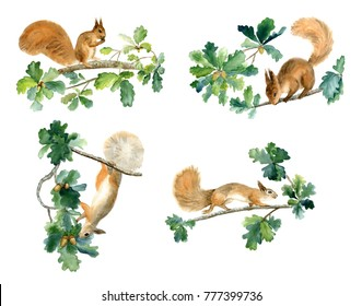 Watercolor squirrels on oak branches isolated on white