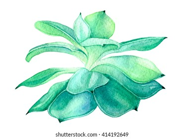 Watercolor Succulent. Painted Succulent Plant. Hand-painted drawing with green tropical plant isolated on white background.