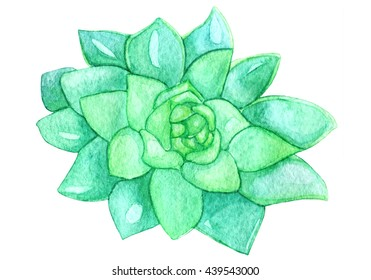 Watercolor Succulent. Painted Succulent Plant. Hand-painted drawing with green tropical plant isolated on white background. Sempervivum botanical illustration.