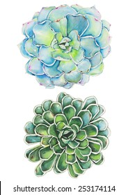 Watercolor succulents painting