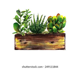 Watercolor succulents in a wooden box