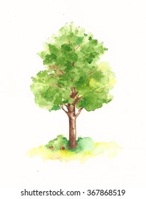 Watercolor tree. Hand drawn painting on white background.