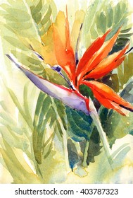 Watercolor Tropical Flower Bird Of Paradise Hand Painted Illustration
