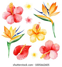 Watercolor tropical flowers collection.Texture with plumeria, hibiscus,bird of paradise flowers.Perfect for wedding,invitations,greeting cards,quotes,pattern,bouquet,logos,Birthday cards,wallpapers