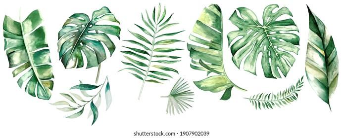 tropische Blätter mit Wasserfarbe. Botanische Dschungelgrafik. Exotisch. Wasserfarbensatz