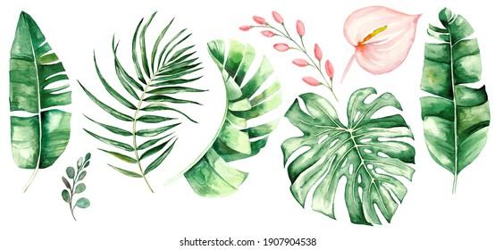 tropische Blätter und Blumen mit Wasserfarbe. Botanische Dschungelgrafik. Exotisch. Wasserfarbensatz
