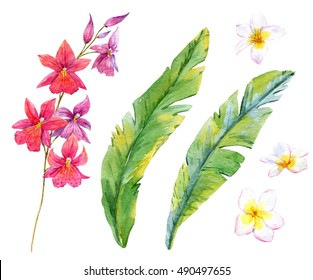 Watercolor tropical set of isolated objects, pink orchid, plumeria flowers, palm leaves