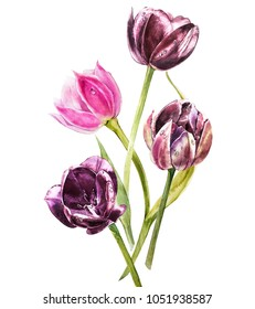 Watercolor tulips flowers. Spring or summer decoration floral botanical illustration. Watercolor isolated. Perfect for invitation, wedding or greeting cards.