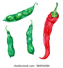 Watercolor vegetables, Watercolor image of red hot pepper and green broad beans isolated on white background, Food watercolor
